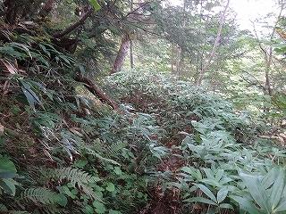 旧歩荷道から西穂高岳_e0064783_19442968.jpg