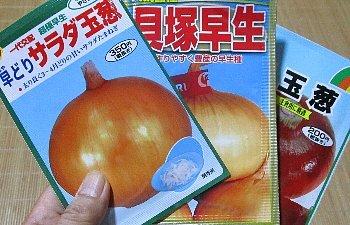 9月15日「玉葱の苗たて」_f0003283_08275194.jpg