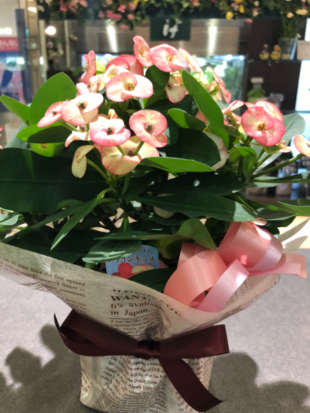花キリンです〜‼️_a0300110_10163847.jpg