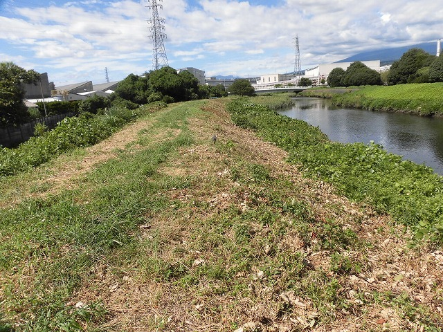 猛暑と少雨が響いている? 滝川のヒガンバナは、開花に向けた成長が遅れ気味!_f0141310_07221142.jpg