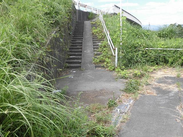 猛暑と少雨が響いている? 滝川のヒガンバナは、開花に向けた成長が遅れ気味!_f0141310_07240349.jpg