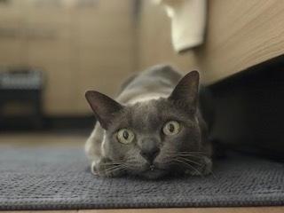 猫の慢性膵炎_c0046120_16242741.jpeg