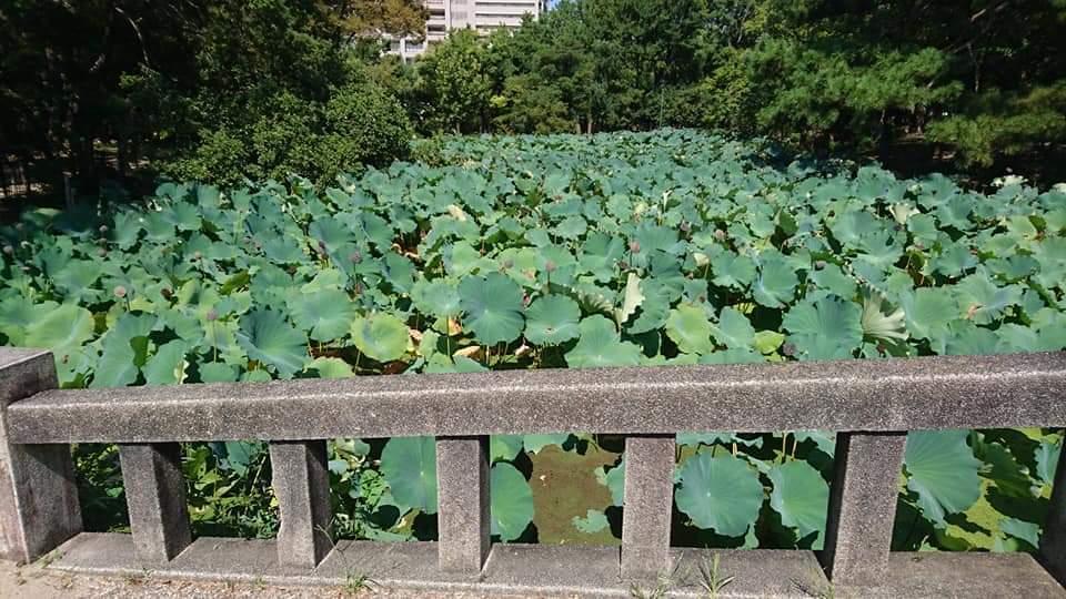 鶴舞公園 「散策編」_f0373339_07491666.jpg