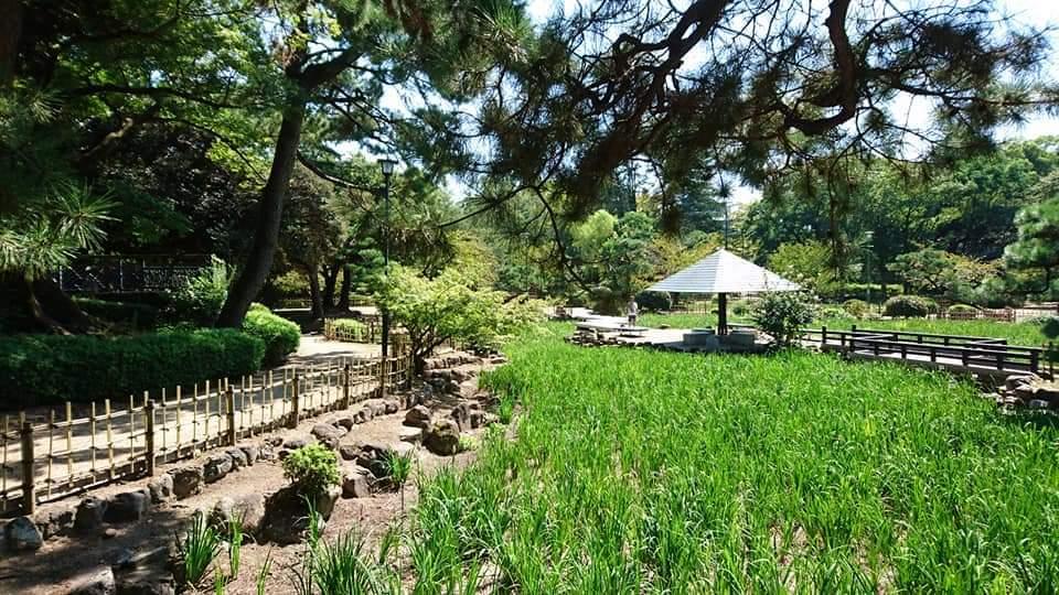 鶴舞公園 「散策編」_f0373339_07493084.jpg