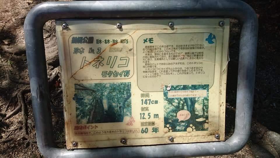鶴舞公園 「散策編」_f0373339_07494430.jpg