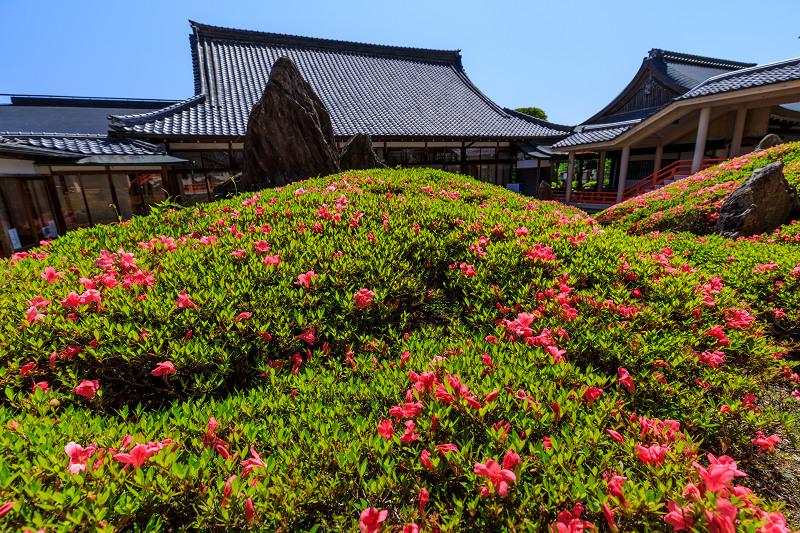 サツキ咲く曲水の庭(松尾大社)_f0155048_0101380.jpg