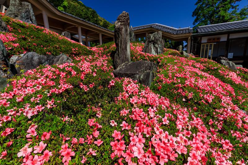 サツキ咲く曲水の庭(松尾大社)_f0155048_0104349.jpg