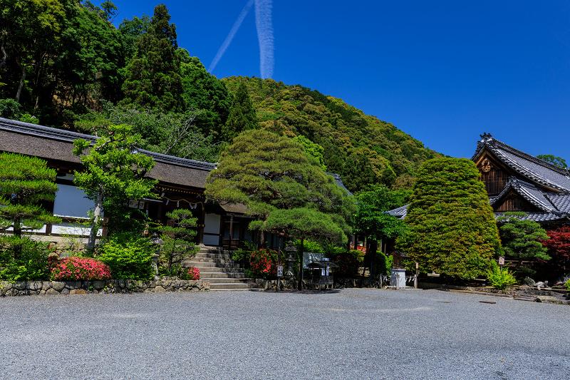サツキ咲く曲水の庭(松尾大社)_f0155048_0113099.jpg