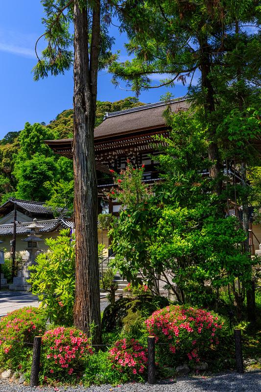 サツキ咲く曲水の庭(松尾大社)_f0155048_0113968.jpg