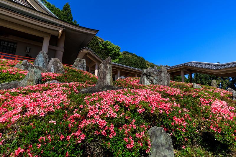 サツキ咲く曲水の庭(松尾大社)_f0155048_074775.jpg