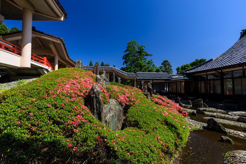サツキ咲く曲水の庭(松尾大社)_f0155048_075847.jpg