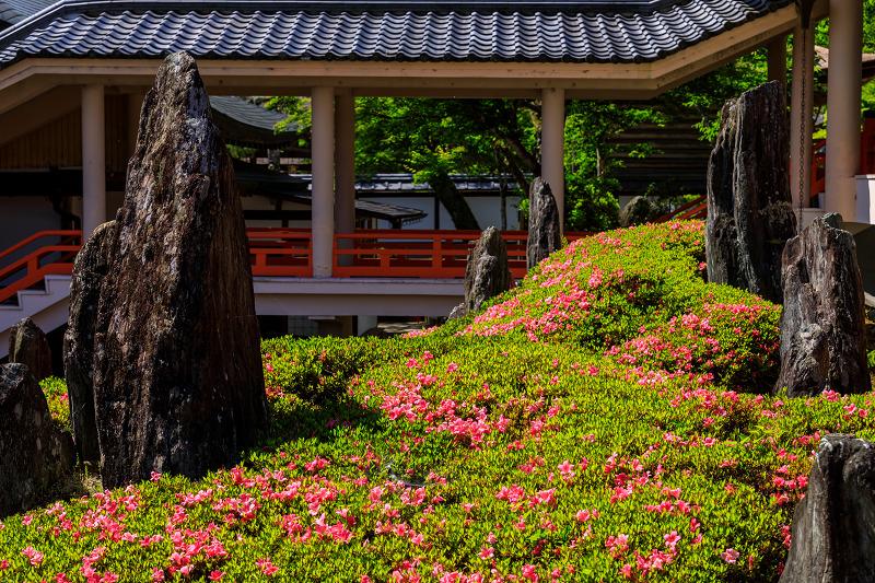 サツキ咲く曲水の庭(松尾大社)_f0155048_084044.jpg