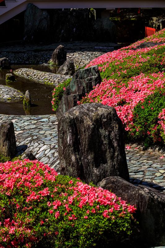 サツキ咲く曲水の庭(松尾大社)_f0155048_085489.jpg