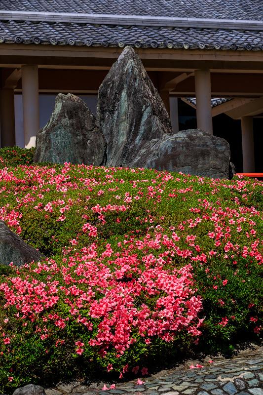 サツキ咲く曲水の庭(松尾大社)_f0155048_092525.jpg