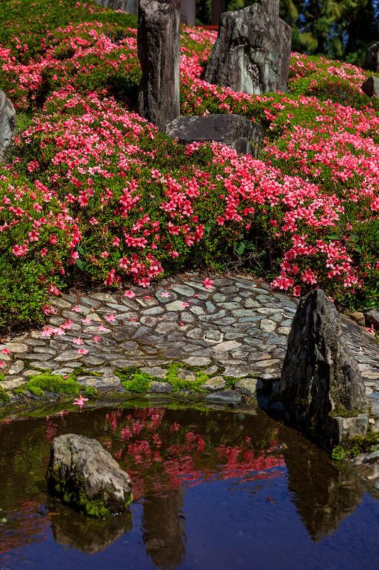 サツキ咲く曲水の庭(松尾大社)_f0155048_094811.jpg