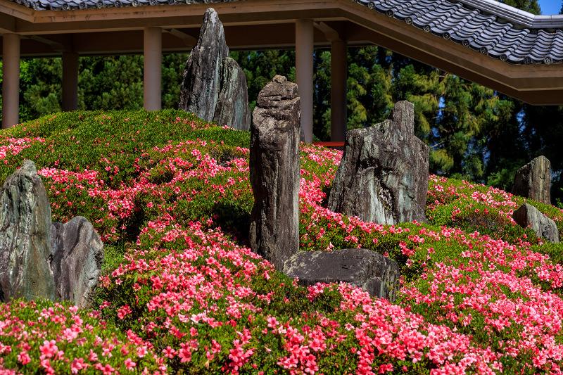 サツキ咲く曲水の庭(松尾大社)_f0155048_095986.jpg