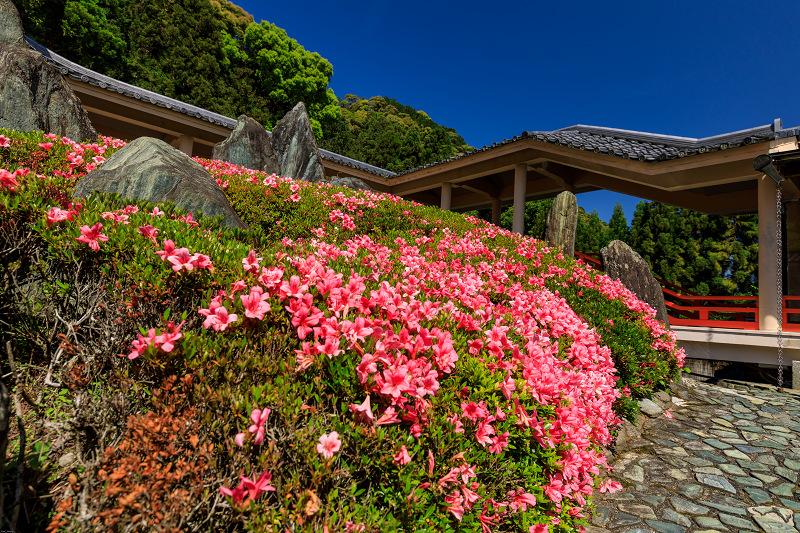 サツキ咲く曲水の庭(松尾大社)_f0155048_2355213.jpg