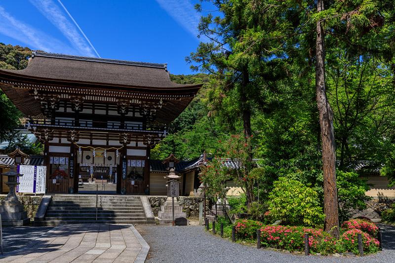 サツキ咲く曲水の庭(松尾大社)_f0155048_23553715.jpg