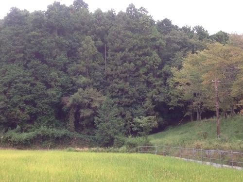 秋の奈良散策_b0153663_17123930.jpeg