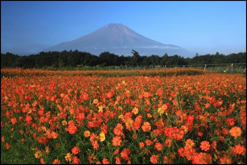 秋色の花の都_a0188405_20324057.jpg