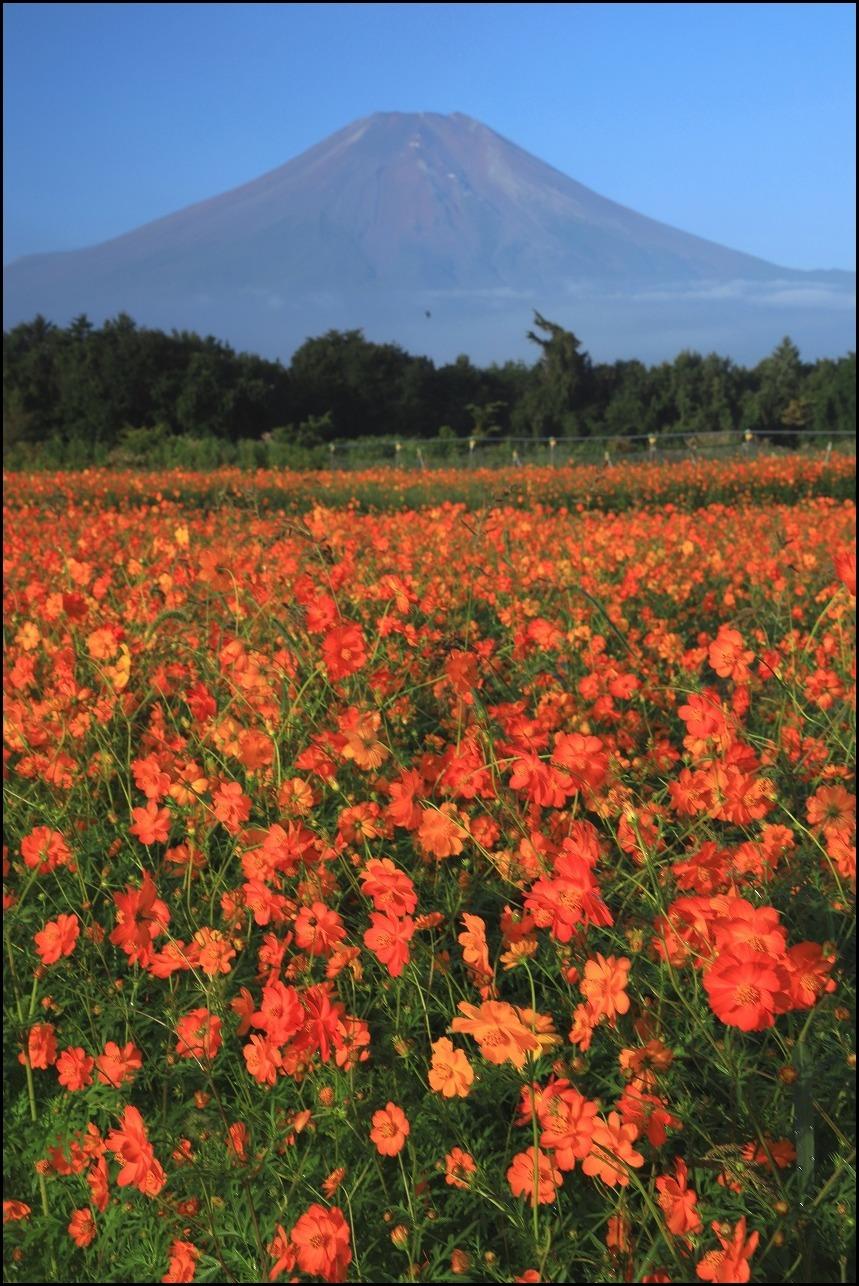 秋色の花の都_a0188405_20324854.jpg