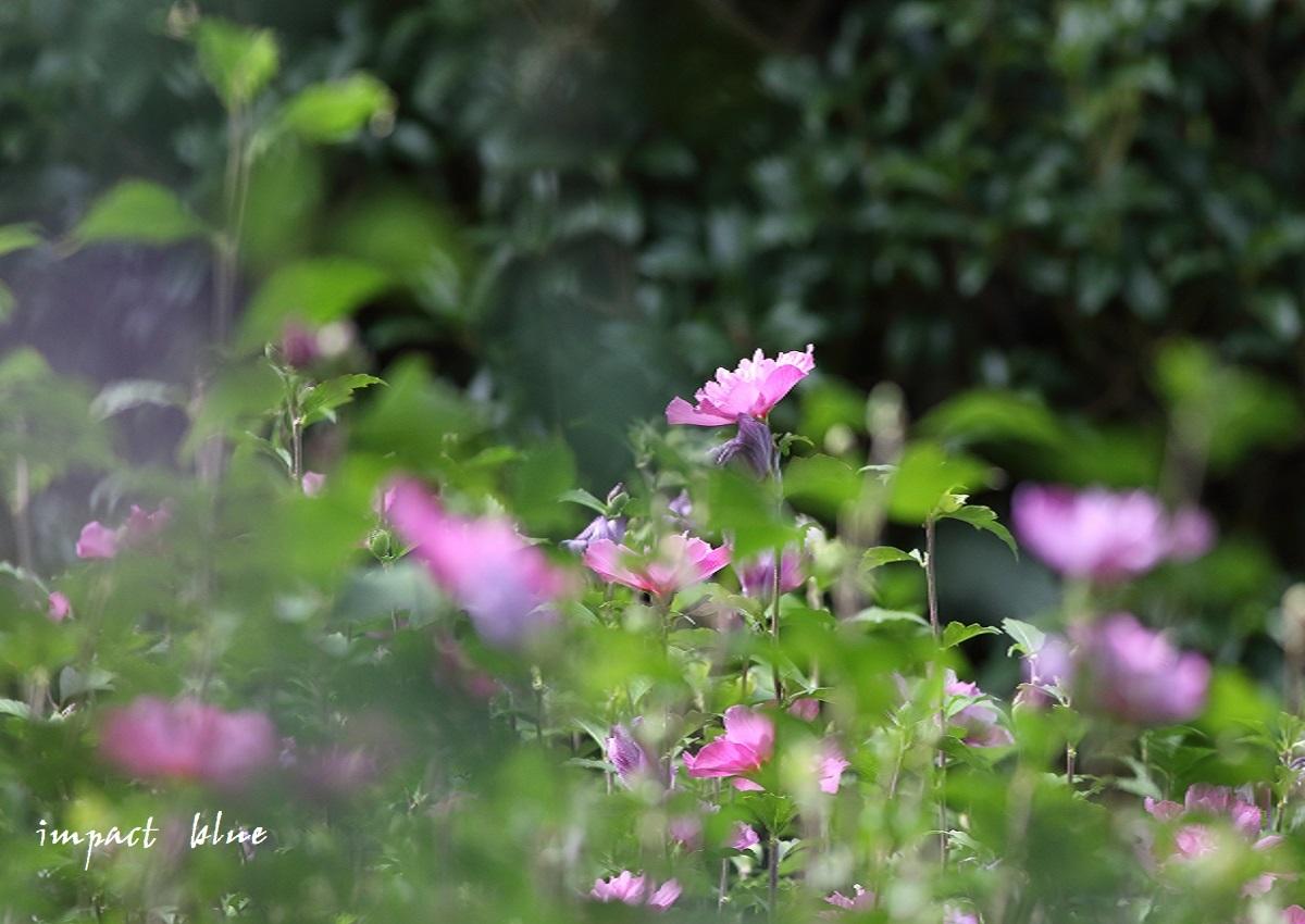 夏の名残(^^)/_a0355908_14525077.jpg