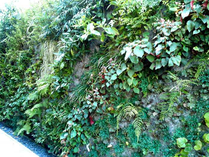 ヴァーティカル・ガーデン  by Patrick Blanc_e0243332_17445144.jpg