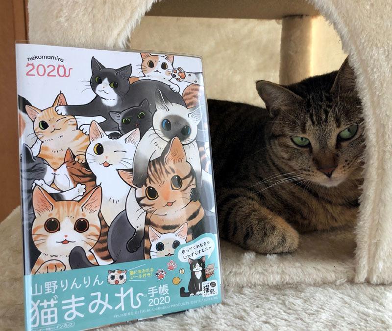 猫まみれ手帳2020_d0118933_14540084.jpg
