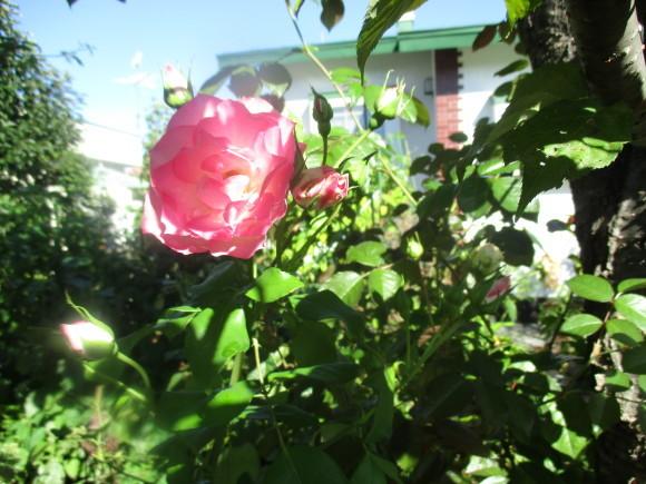 お花あれこれ_a0279743_11050702.jpg