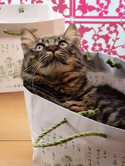 紙袋ラブな猫♪_d0319943_07483839.jpg