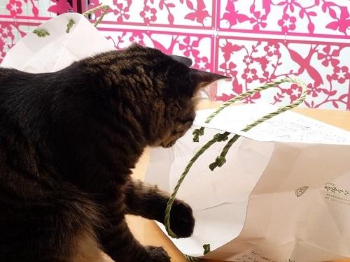紙袋ラブな猫♪_d0319943_07484985.jpg