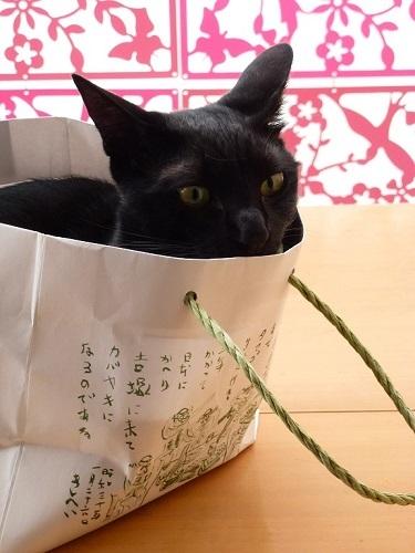 紙袋ラブな猫♪_d0319943_07490187.jpg