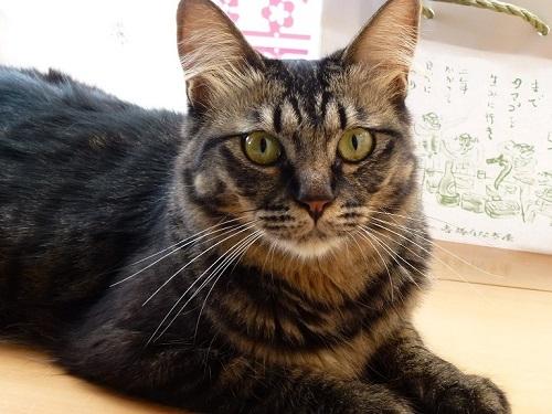 紙袋ラブな猫♪_d0319943_07554517.jpg
