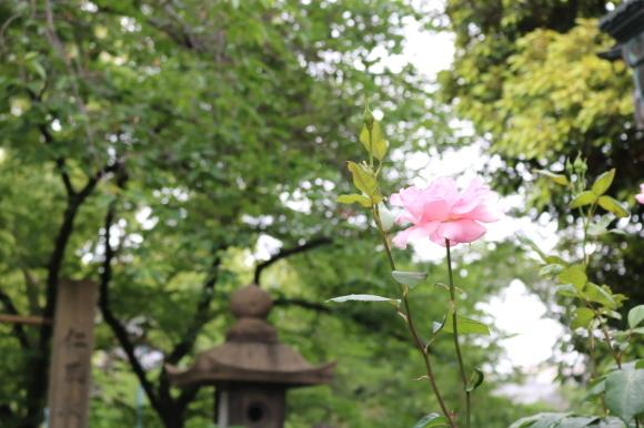高津宮は神社です_c0001670_23050223.jpg