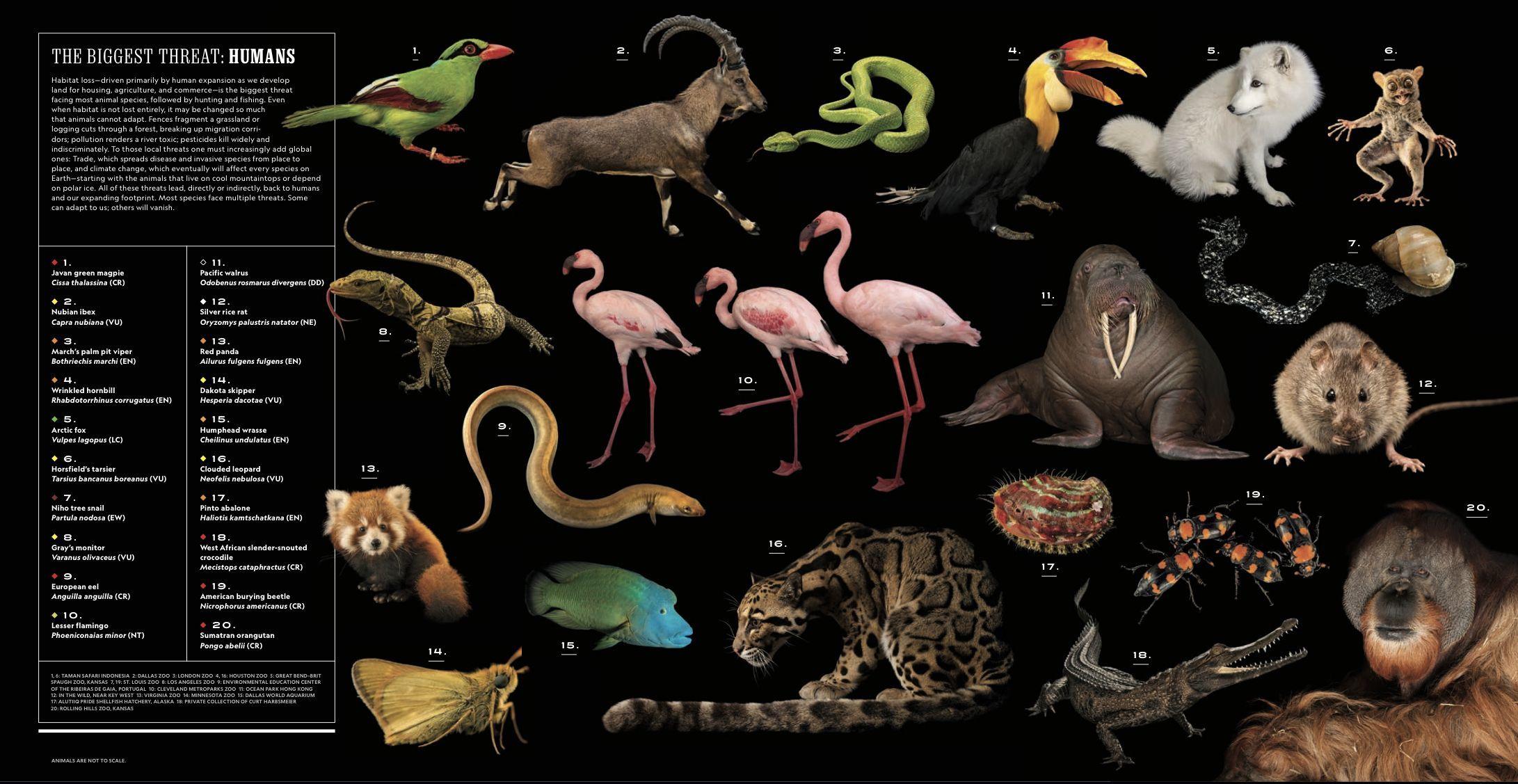 National Geographic とビュフォンの博物誌_c0025115_21540800.jpg