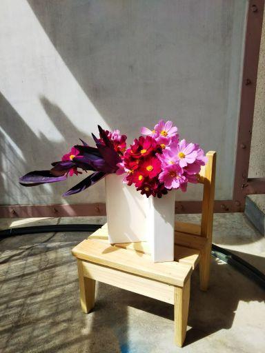 マッスの秋桜✨_c0165824_18181566.jpg