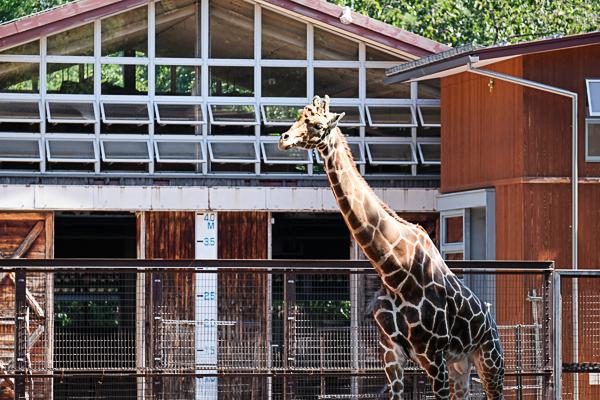 茶臼山動物園_e0344430_21215640.jpg