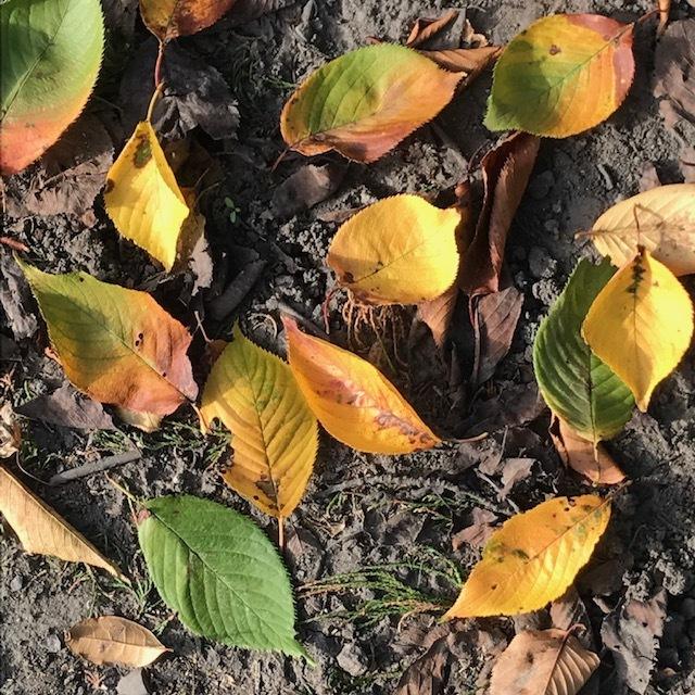 秋ですね。_e0226943_22215546.jpg