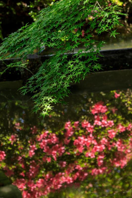 花菖蒲とサツキ(梅宮大社)_f0155048_23334155.jpg