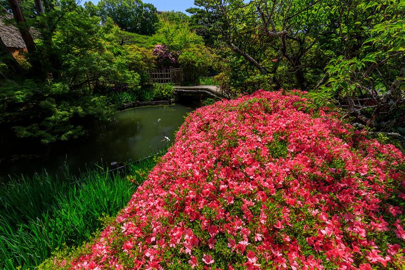 花菖蒲とサツキ(梅宮大社)_f0155048_23343453.jpg