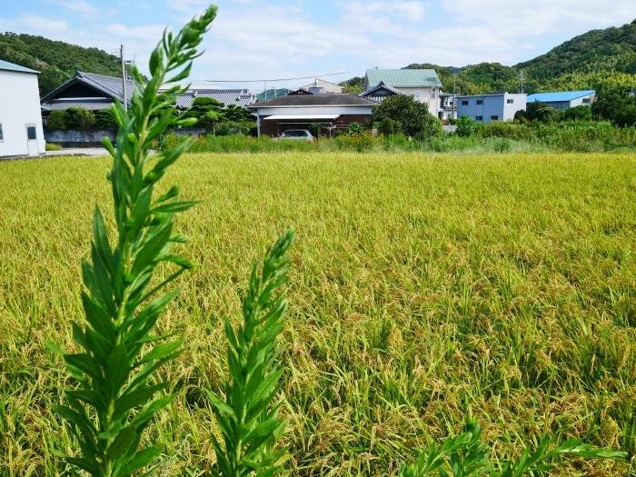 田園風景  2019-09-23 00:00  _b0093754_21264470.jpg