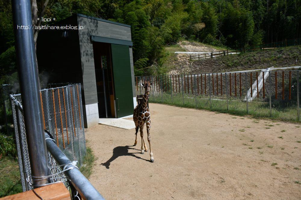 キリンのいる動物園が増えたので会いに行きました。_b0024758_21533630.jpg