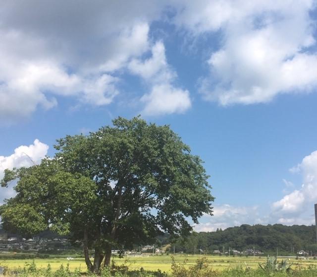 彼岸前のお墓参り_c0344679_19523110.jpg