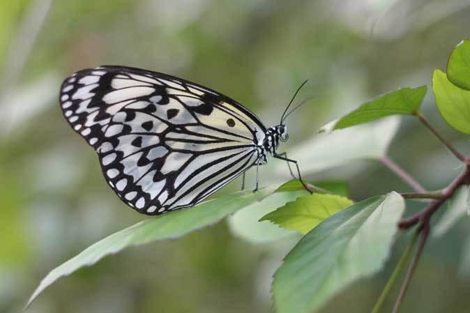 足立区生物園~宇宙メダカと蝶が舞う大温室_b0355317_22244839.jpg