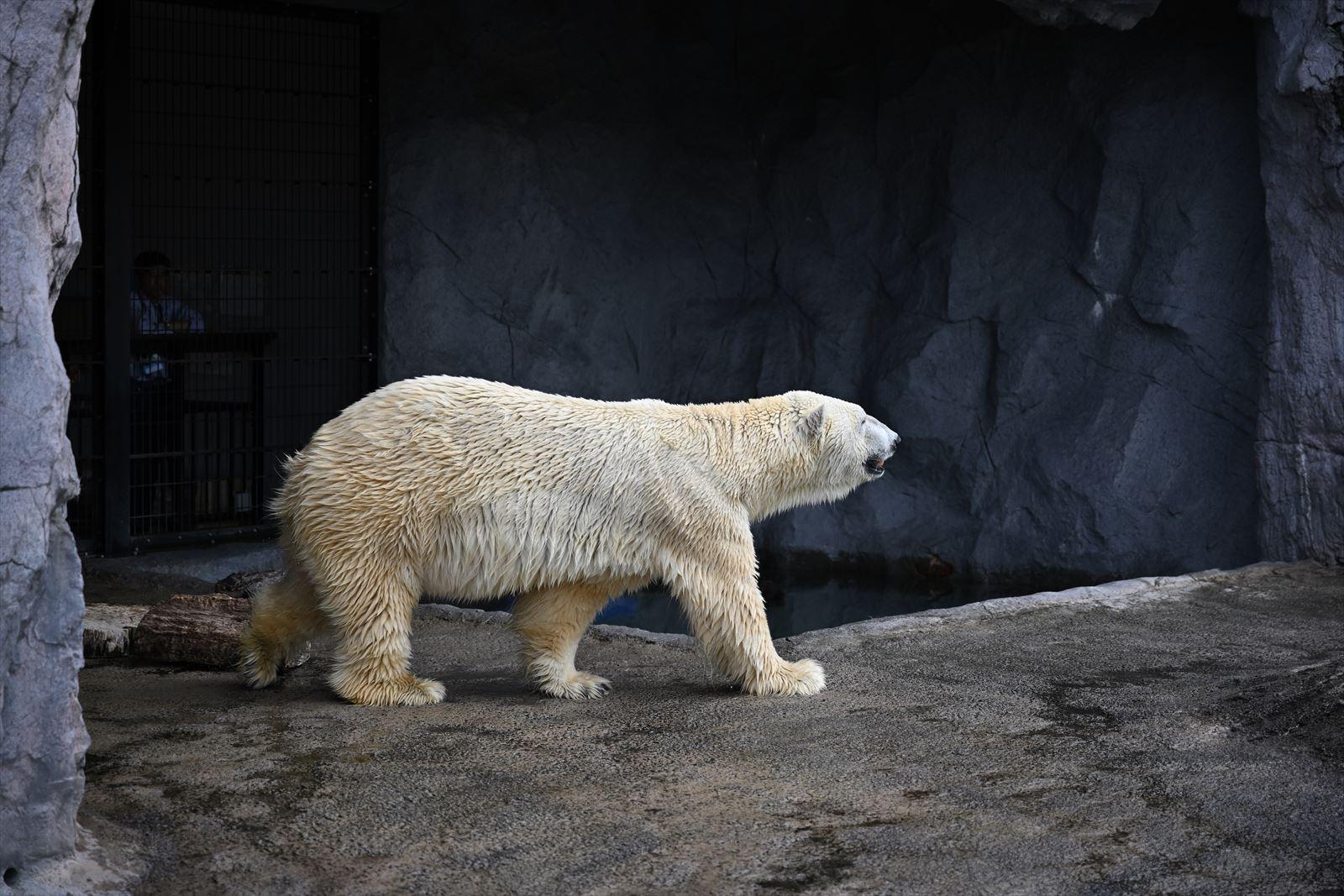 旭山動物園 2019.9.16 その1_a0145819_1241737.jpg