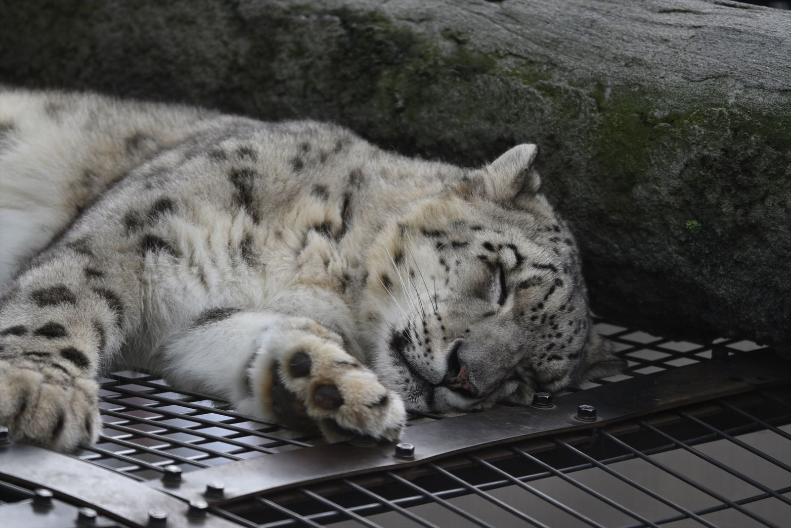 旭山動物園 2019.9.16 その1_a0145819_12434066.jpg