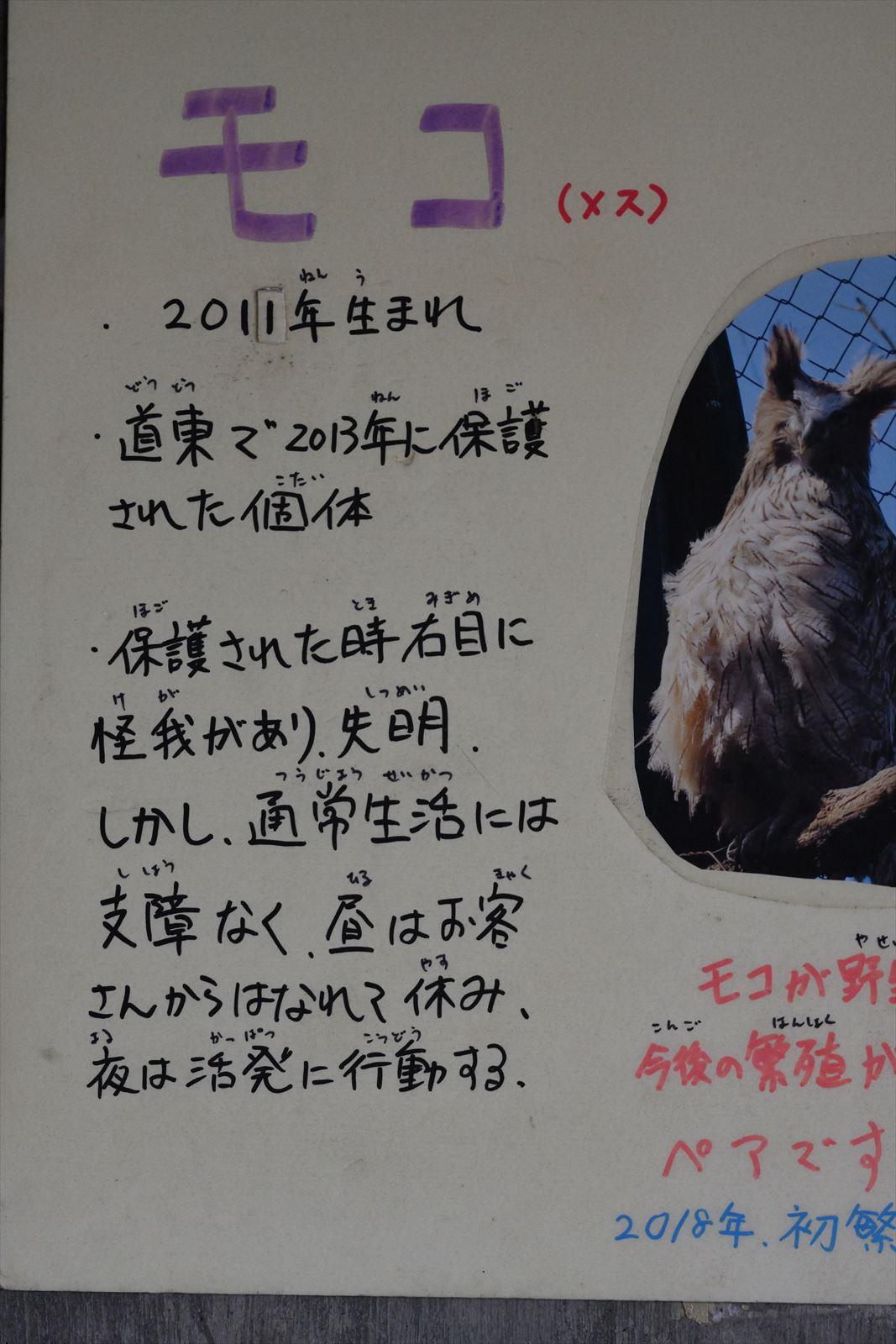 旭山動物園 2019.9.16 その2_a0145819_17314843.jpg
