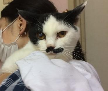 9/17 センターレポート【猫編】PART2_f0078320_00153678.jpg