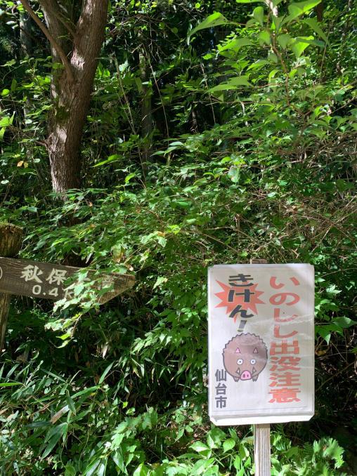 AYA仙台旅行レポ_e0062921_15480603.jpg
