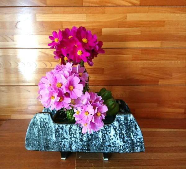 マッスの秋桜✨_c0165824_11560872.jpg